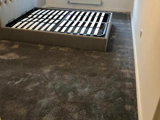 Invictus carpet installed